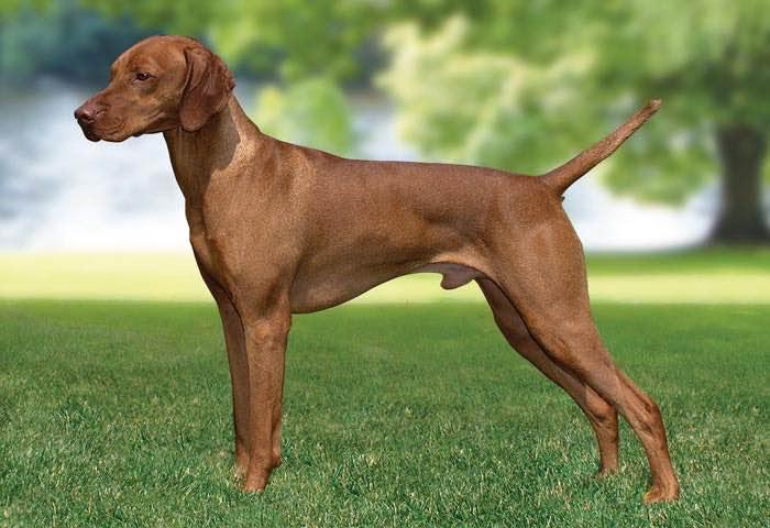 Choosing A Dog Breed Uk