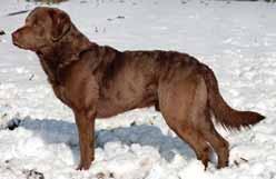 Canadian Kennel Club | Club Canin Canadien