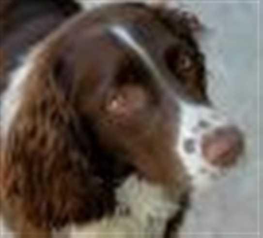 Dog Kennel Sackville Nb