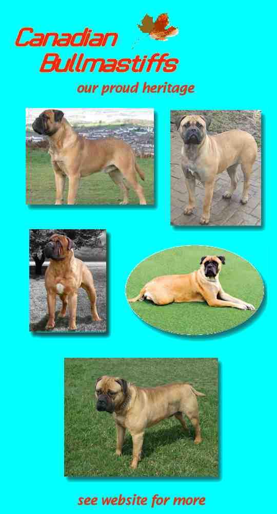 Kennel Club Microchip History Of Dog