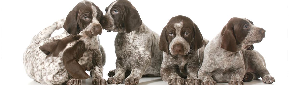Canadian Kennel Club | Club Canin Canadien