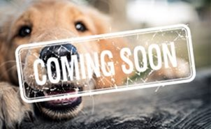 CKC | Purebred Puppies, Dog Competitions, Show Dog Events | CKC