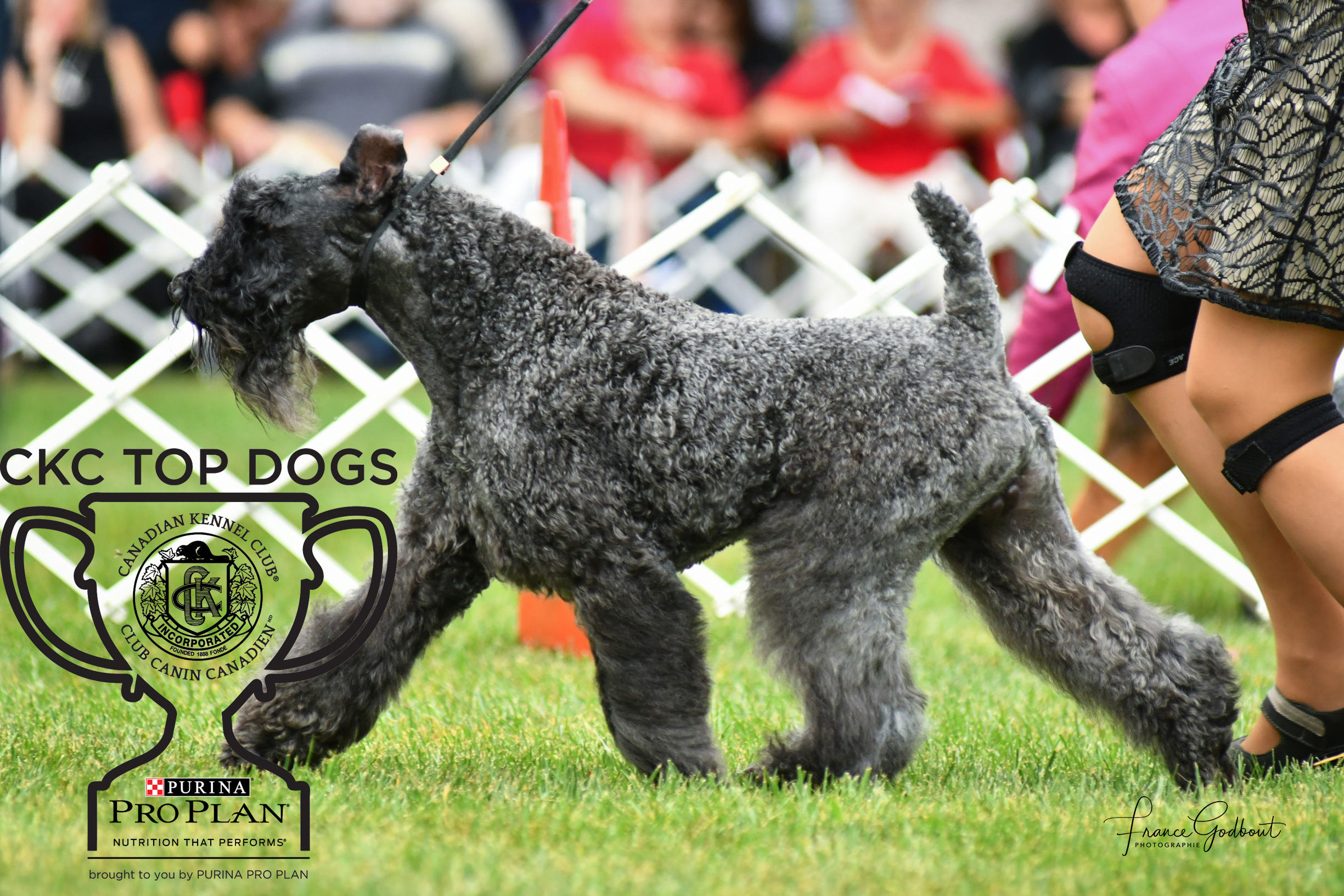 2018 Top Show Dogs | CKC
