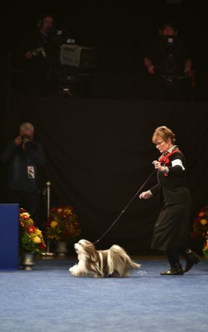 hjG4UoKTuiW4oaMMCYRi_11-16-19-Gaiting-at-National-Dog-Show-Havanese7.jpg