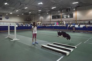 Broad-jump-Photo-Brian-Gray-Swansea-Dog-Obedience.jpg