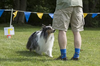 Rally-Photo-Brian-Gray-Swansea-Dog-Obedience-1.jpg