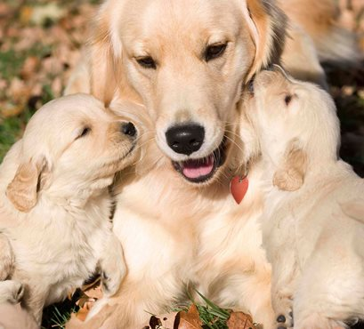 Mother_pups-1.jpg