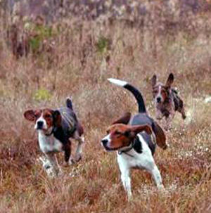 Beagles-announcement.jpg