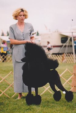 1995 Ch. Dawin High Falutin; Standard Poodle photo courtesy of Allison Foley