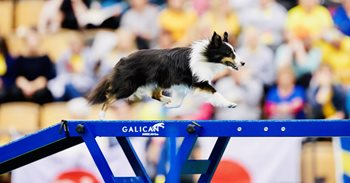 Fable-Agility-AKC-National-1.jpeg