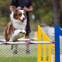 Agility-Jump-Photo-Jacques-Beauvais.jpg