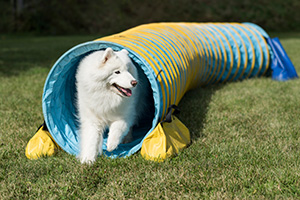 Agility-Tunnel-Photo-Brian-Gray-1.jpg