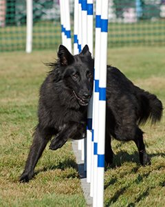 Agility-Weaves-