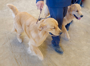 How to attend a Dog Show | CKC