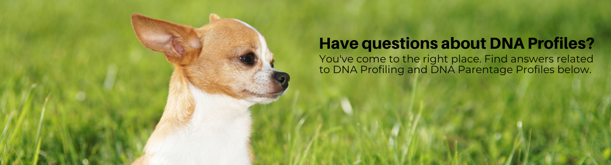 DNA Profiles Banner