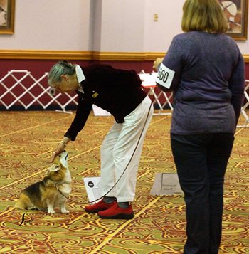 Rally-dog,-handler-judge-Photo-Laurie-Savoie.jpg
