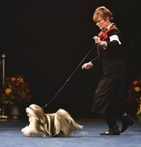 hjG4UoKTuiW4oaMMCYRi_11-16-19-Gaiting-at-National-Dog-Show-Havanese7-copy.jpg